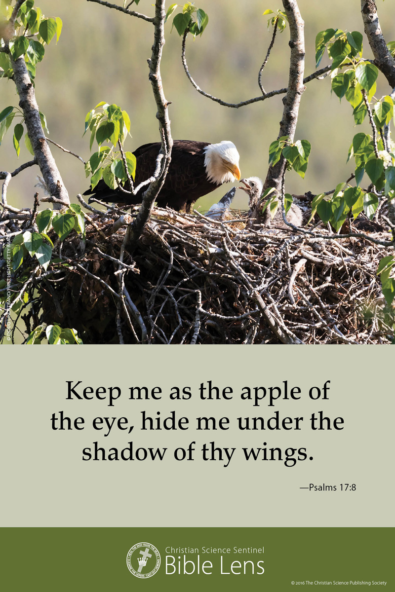 Bible Lens: Keep me as the apple (csps bl27)
