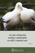 Bible Lens: As one whom his mother comforteth (csps bl6)